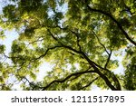 forest low angle view  autumn... | Shutterstock . vector #1211517895