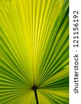 sun light over palm leaf. | Shutterstock . vector #121156192