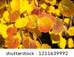 indian summer. golden fall. a... | Shutterstock . vector #1211639992
