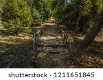 hiking place forest mountain... | Shutterstock . vector #1211651845
