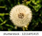 close up of dandelion seed | Shutterstock . vector #1211691415