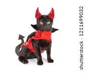 Cute black kitten wearing funny ...