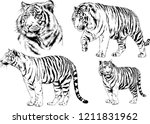 vector drawings sketches... | Shutterstock .eps vector #1211831962