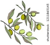 olive tree in a vector style... | Shutterstock .eps vector #1211865145