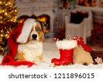 christmas  dog australian... | Shutterstock . vector #1211896015