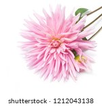 single pink dahlia flower.... | Shutterstock . vector #1212043138