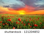 field with green grass and red... | Shutterstock . vector #121204852