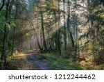 sunlight and sunbeams in the... | Shutterstock . vector #1212244462