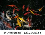 koi swimming in a water garden... | Shutterstock . vector #1212305155
