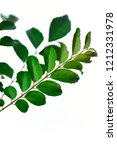 bunch of curry leaves over... | Shutterstock . vector #1212331978