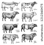 farm cattle bulls and cows.... | Shutterstock .eps vector #1212360475