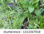 fresh river and marsh... | Shutterstock . vector #1212367018