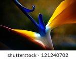 Strelicium Flower Closeup Macro