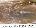 closeup head of water turtle or ... | Shutterstock . vector #1212669835