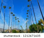 palm trees aligned in raws