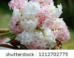 bouquet of pink and white...   Shutterstock . vector #1212702775