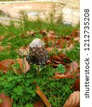 shaggy mane  old cap is melting ...   Shutterstock . vector #1212735208