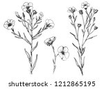 flax plant and flower. botany... | Shutterstock .eps vector #1212865195