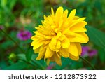 beautiful yellow rudbeckia... | Shutterstock . vector #1212873922