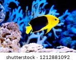 Aquarium Sea Fish Wallpaper