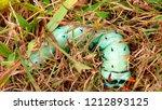 hickory horned devil... | Shutterstock . vector #1212893125