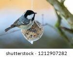 Coal Tit Bird On Nuts Seeds In...