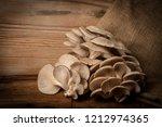 oyster mushrooms   pleurotus... | Shutterstock . vector #1212974365