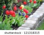 Multicolored Tulips In A...