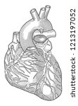 black and white anatomic heart... | Shutterstock .eps vector #1213197052