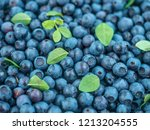 blueberry with leaves. | Shutterstock . vector #1213204555