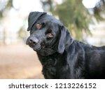 a black retriever mixed breed...   Shutterstock . vector #1213226152