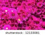 pink flowers on a field in... | Shutterstock . vector #12133081