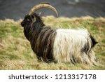 wild  goat in the highlands of... | Shutterstock . vector #1213317178