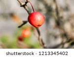 small red apples and blue sky.... | Shutterstock . vector #1213345402