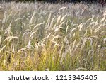 meadow with tall dryed out... | Shutterstock . vector #1213345405