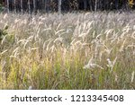 meadow with tall dryed out... | Shutterstock . vector #1213345408