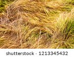 meadow with tall dryed out... | Shutterstock . vector #1213345432