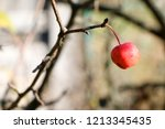 small red apples and blue sky.... | Shutterstock . vector #1213345435