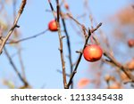 small red apples and blue sky.... | Shutterstock . vector #1213345438