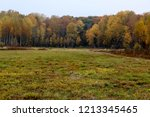 wild natural forest of old... | Shutterstock . vector #1213345465