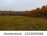 wild natural forest of old... | Shutterstock . vector #1213345468