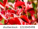 autumn colorful barberry red... | Shutterstock . vector #1213345498