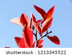 autumn colorful barberry red... | Shutterstock . vector #1213345522