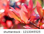 autumn colorful barberry red... | Shutterstock . vector #1213345525