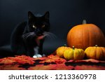 Stock photo black and white cat with pumpkins sitting in autumn leaves halloween october red october 1213360978