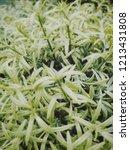small green garden | Shutterstock . vector #1213431808