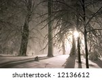 Evening forest snowy landscape - stock photo