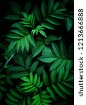 green leaves texture | Shutterstock . vector #1213666888