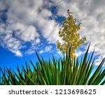 beautiful flower on blue sky | Shutterstock . vector #1213698625