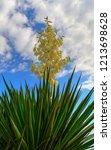 beautiful flower on blue sky | Shutterstock . vector #1213698628